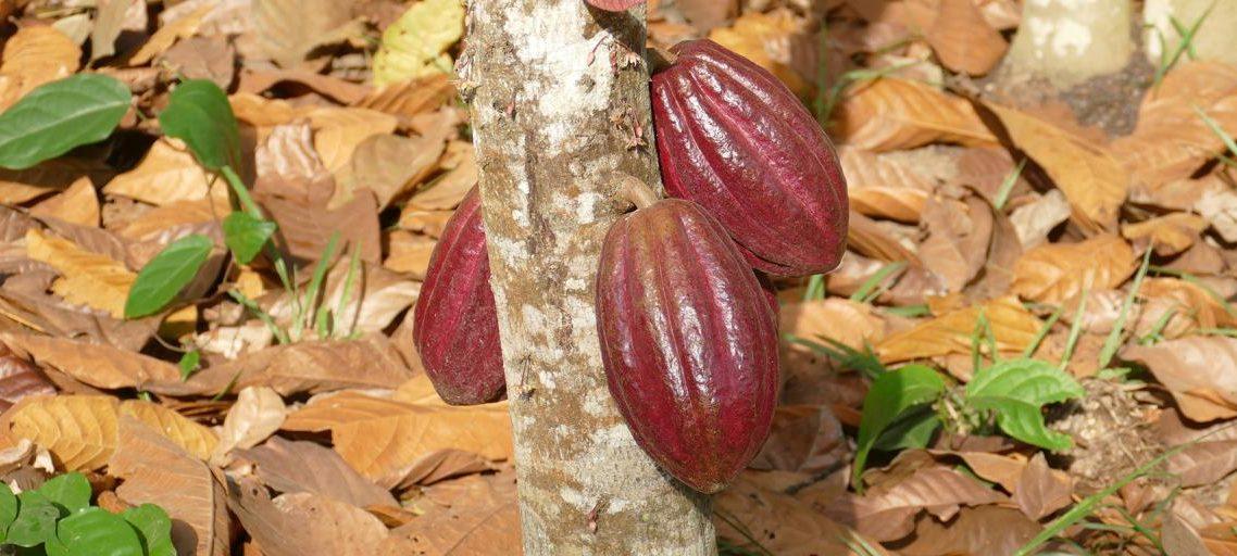 Principali paesi produttori di cioccolato al mondo
