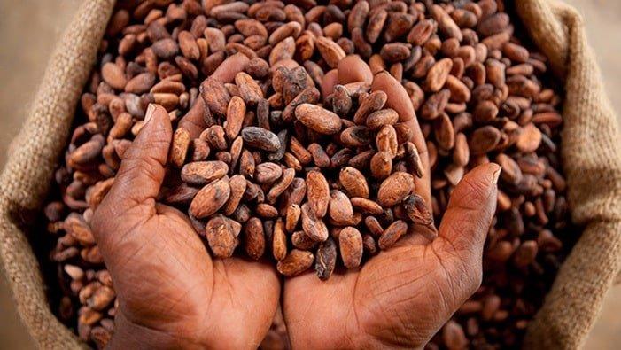 Produzione Cacao Ghana